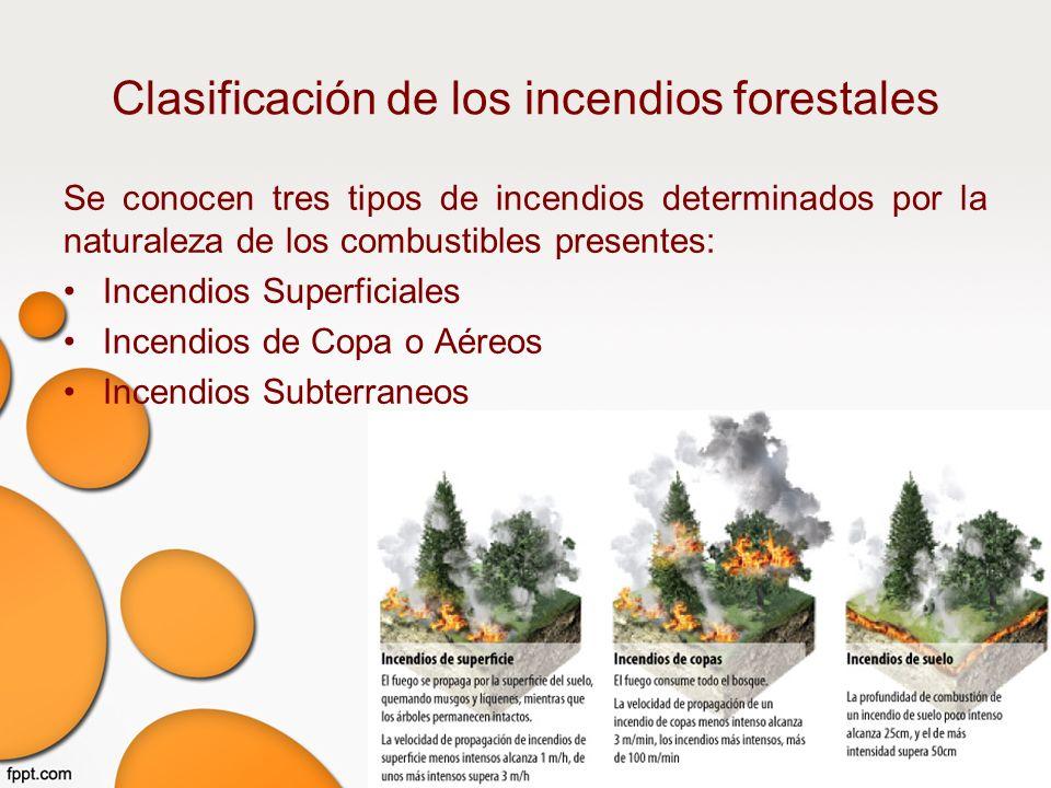 Incendios forestales m2s3 aplica actividades de protecci n for Tipos de plantas forestales