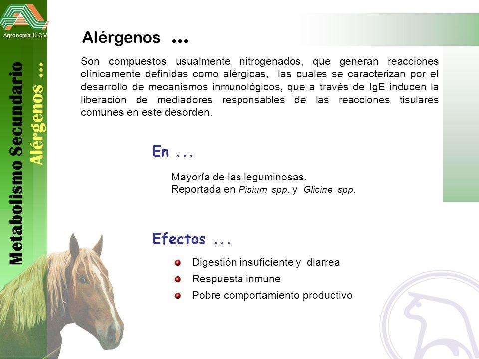 Metabolismo Secundario Alérgenos …
