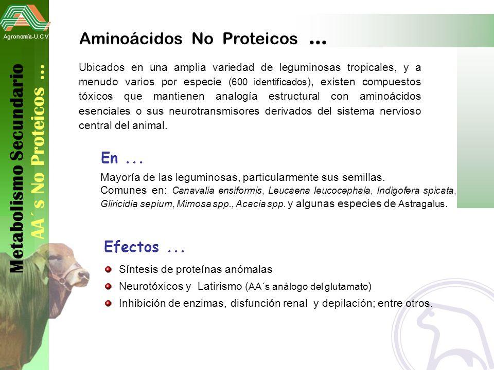 Metabolismo Secundario AA´s No Proteicos …