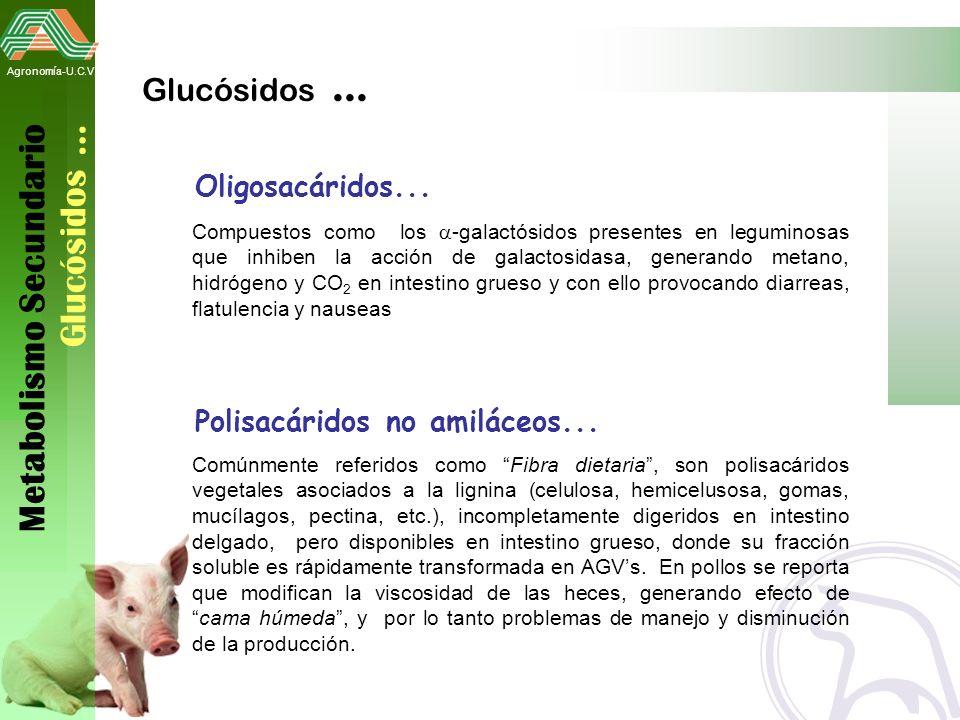 Metabolismo Secundario Glucósidos …