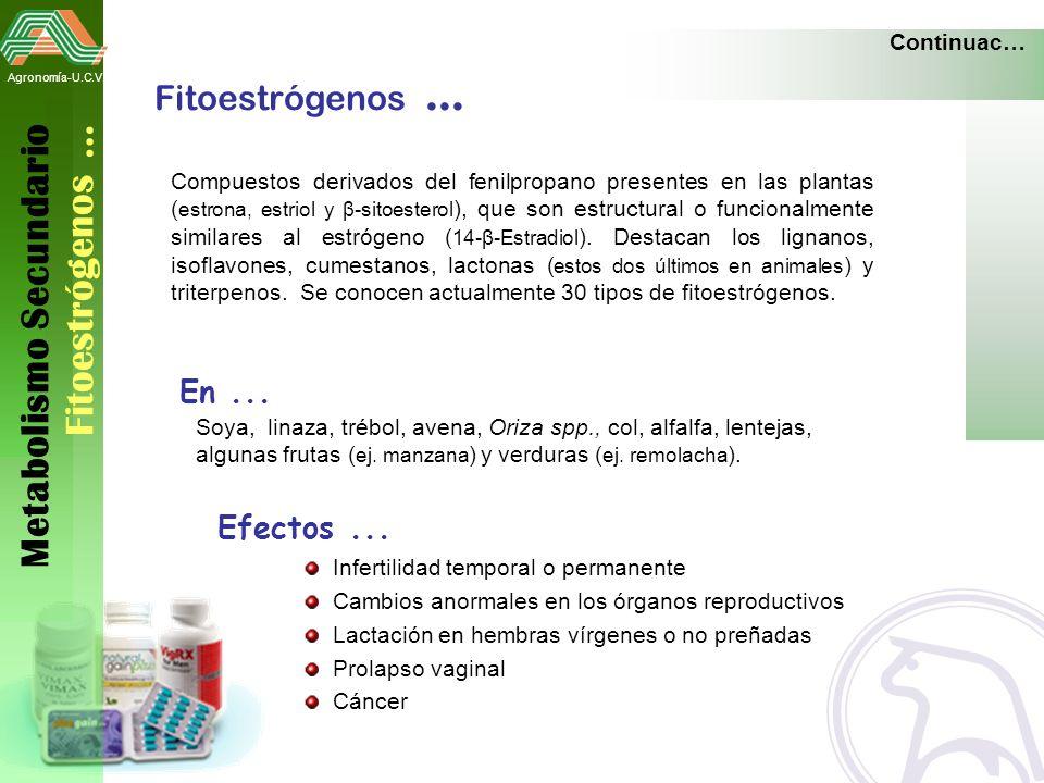 Metabolismo Secundario Fitoestrógenos …