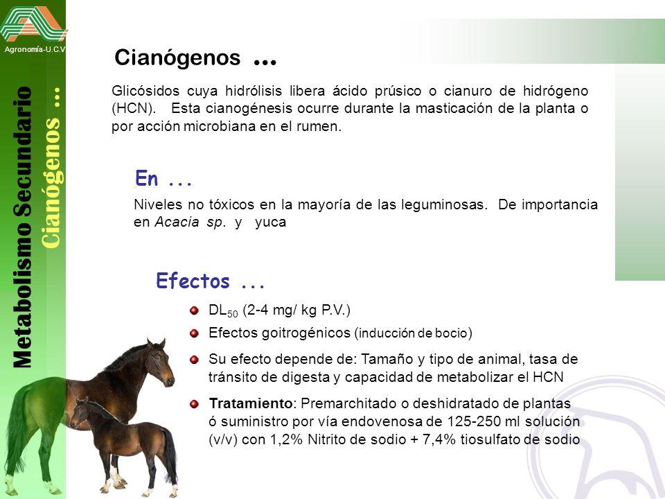 Metabolismo Secundario Cianógenos …