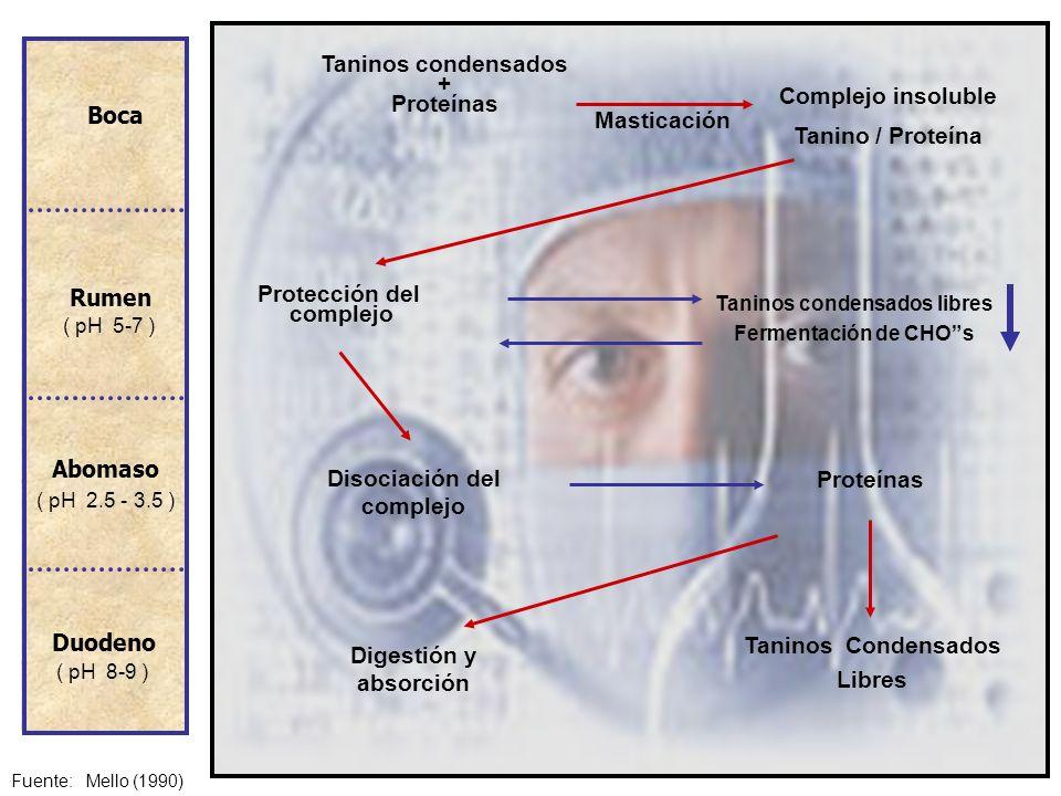 Taninos condensados libres Disociación del complejo