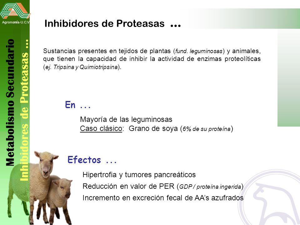 Metabolismo Secundario Inhibidores de Proteasas …