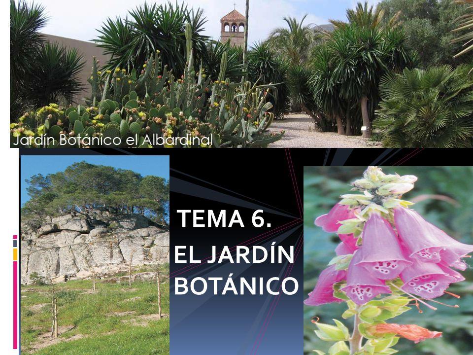 Jardines bot nicos tema 6 el jard n bot nico ppt video for Jardin botanico medicinal