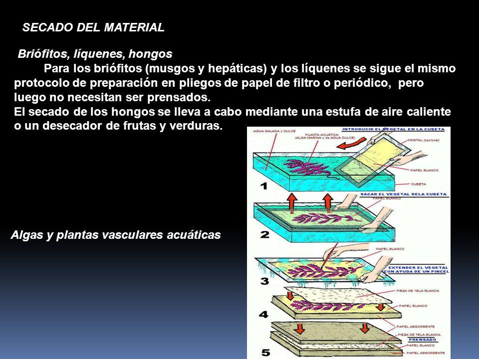 SECADO DEL MATERIAL Briófitos, líquenes, hongos.