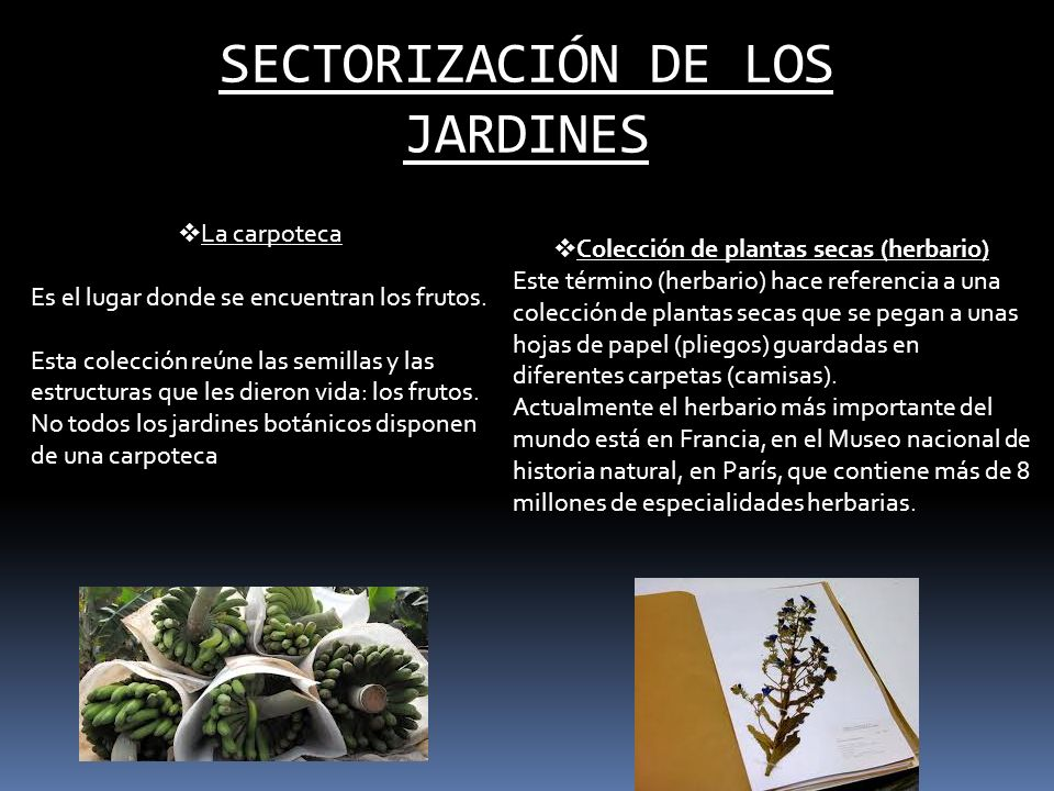 SECTORIZACIÓN DE LOS JARDINES