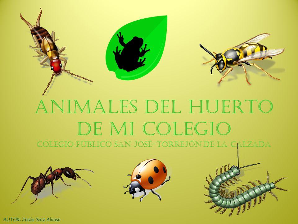 ANIMALES DEL HUERTO DE MI COLEGIO Colegio público San José-Torrejón de la Calzada
