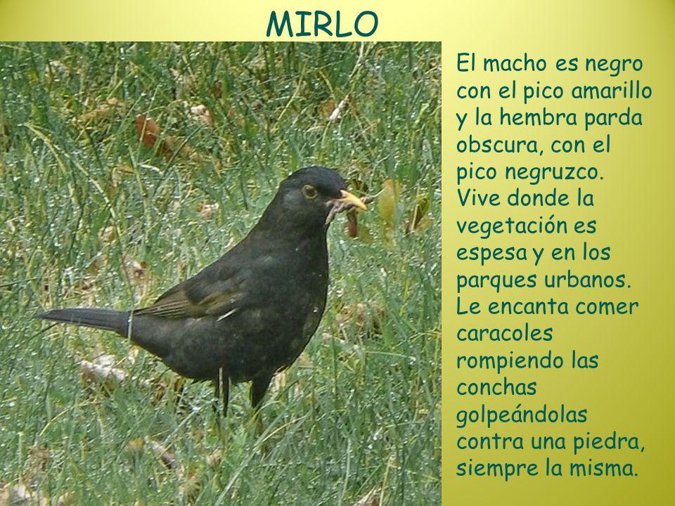 MIRLO