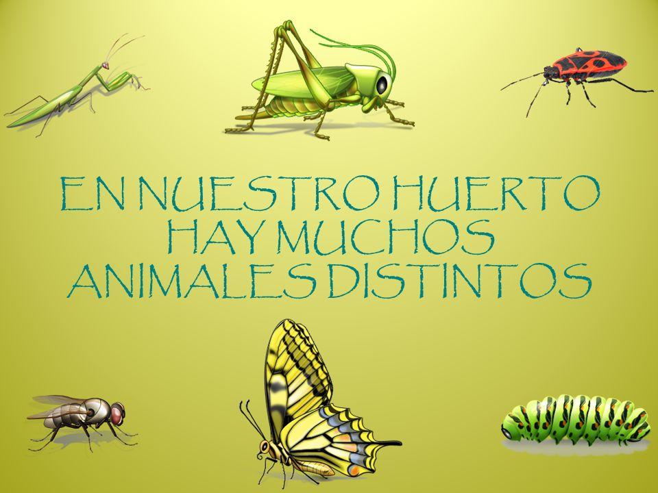 EN NUESTRO HUERTO HAY MUCHOS ANIMALES DISTINTOS