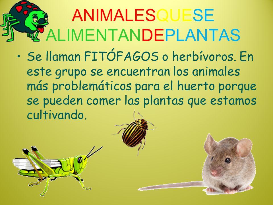 ANIMALESQUESE ALIMENTANDEPLANTAS