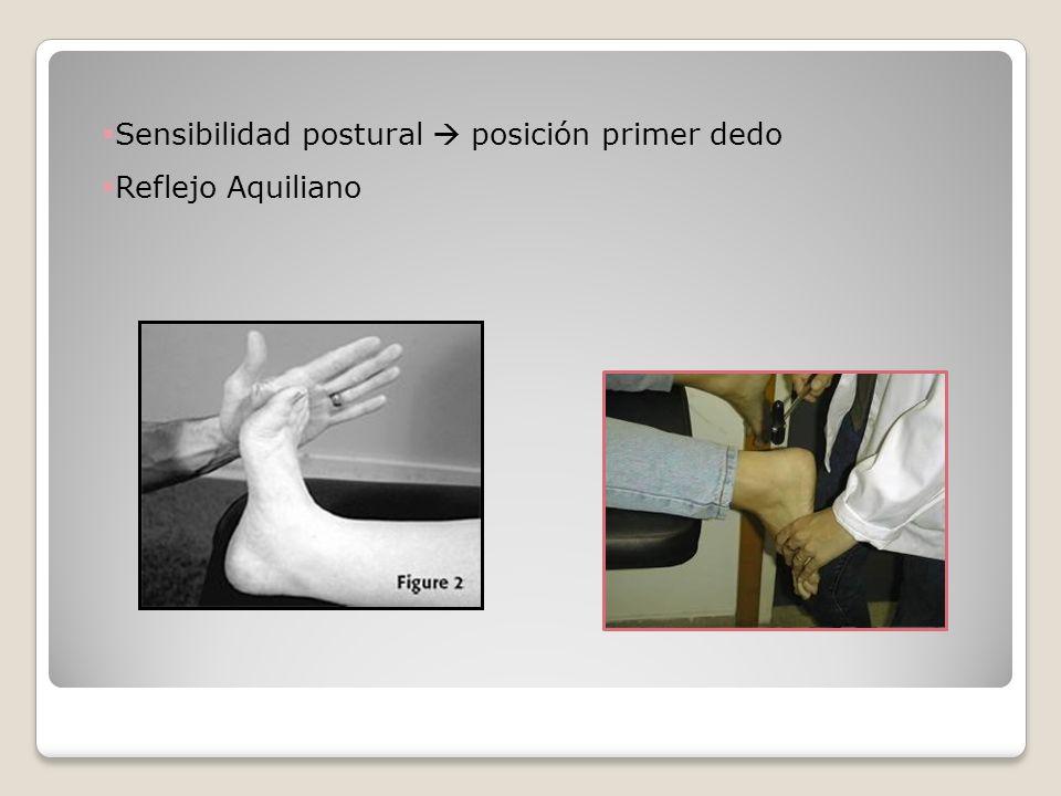 Sensibilidad postural  posición primer dedo
