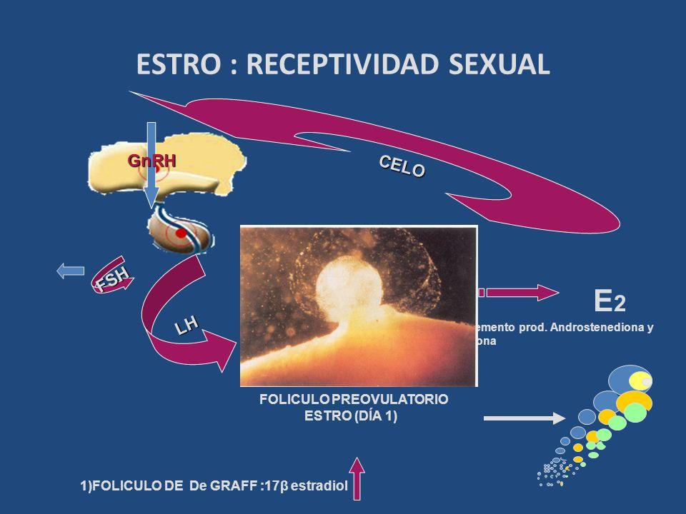 ESTRO : RECEPTIVIDAD SEXUAL