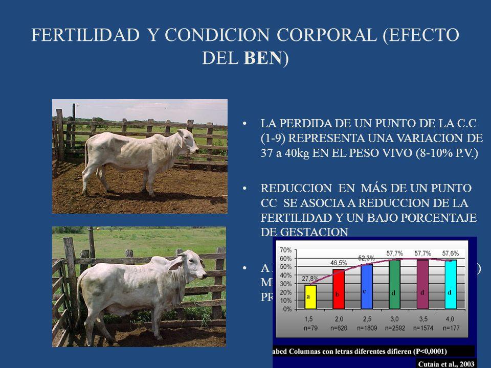 FERTILIDAD Y CONDICION CORPORAL (EFECTO DEL BEN)