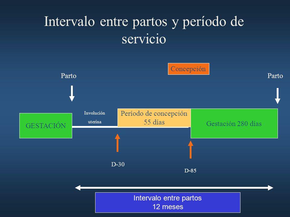 Intervalo entre partos y período de servicio