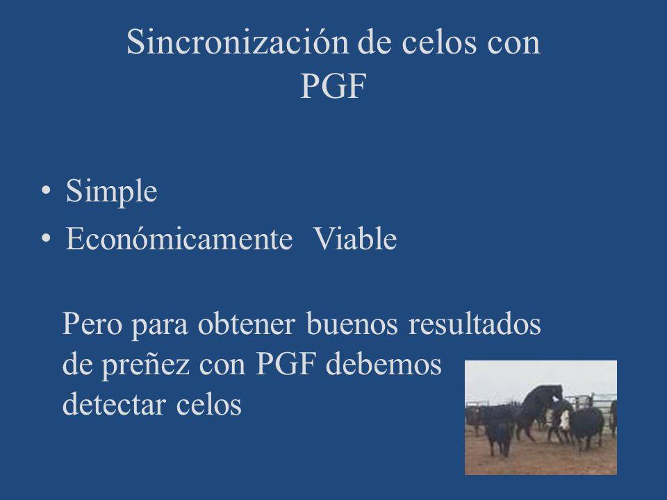 Sincronización de celos con PGF