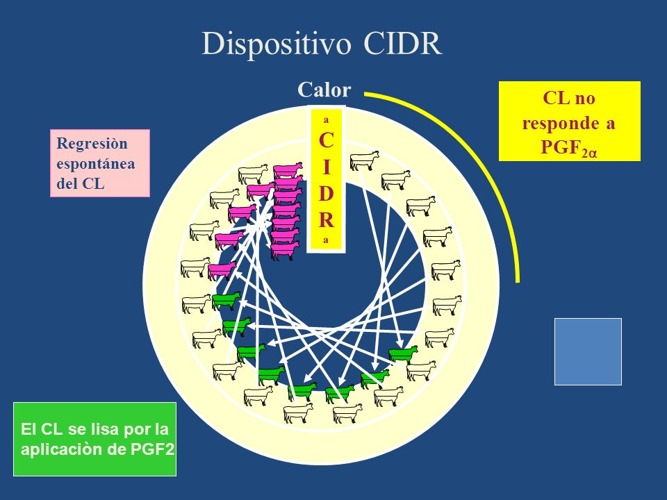 Dispositivo CIDR Ciclo Estral Calor CL no responde a PGF2 1 2 3 4 5
