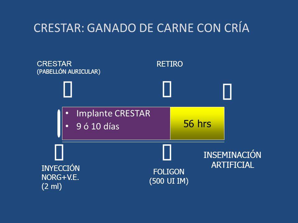 CRESTAR: GANADO DE CARNE CON CRÍA