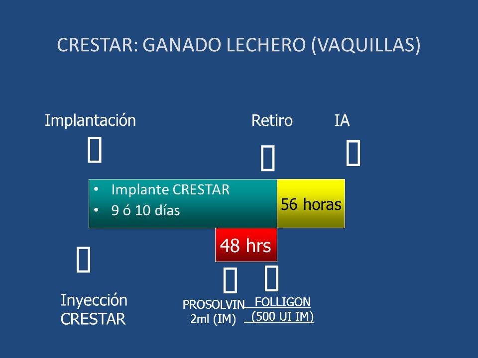 CRESTAR: GANADO LECHERO (VAQUILLAS)