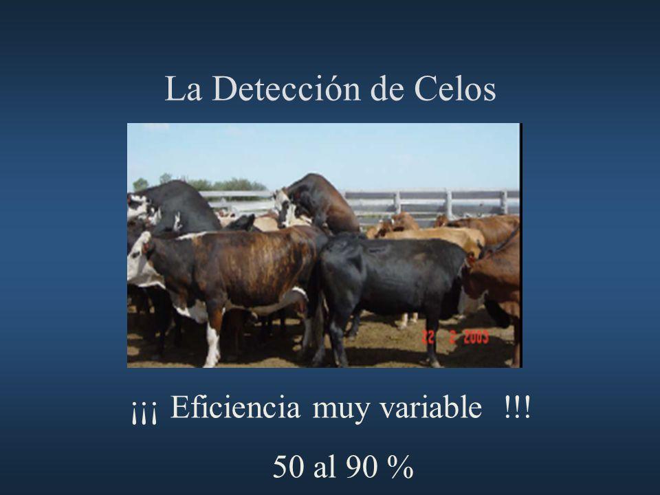 La Detección de Celos ¡¡¡ Eficiencia muy variable !!! 50 al 90 % 40
