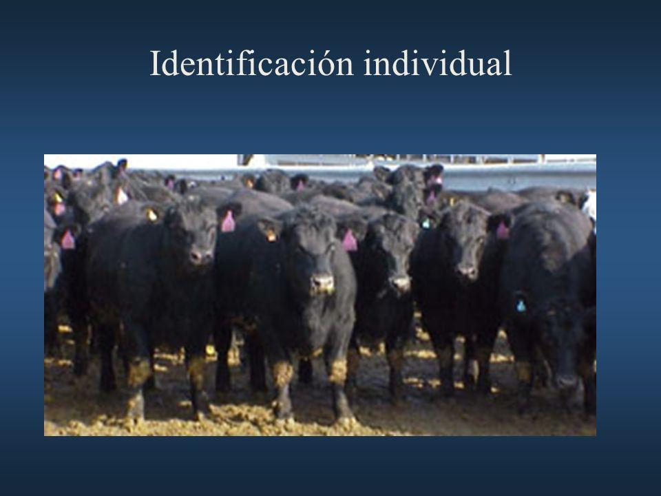 Identificación individual