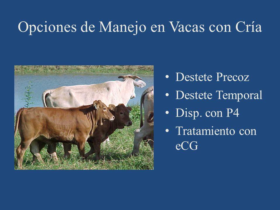 Opciones de Manejo en Vacas con Cría