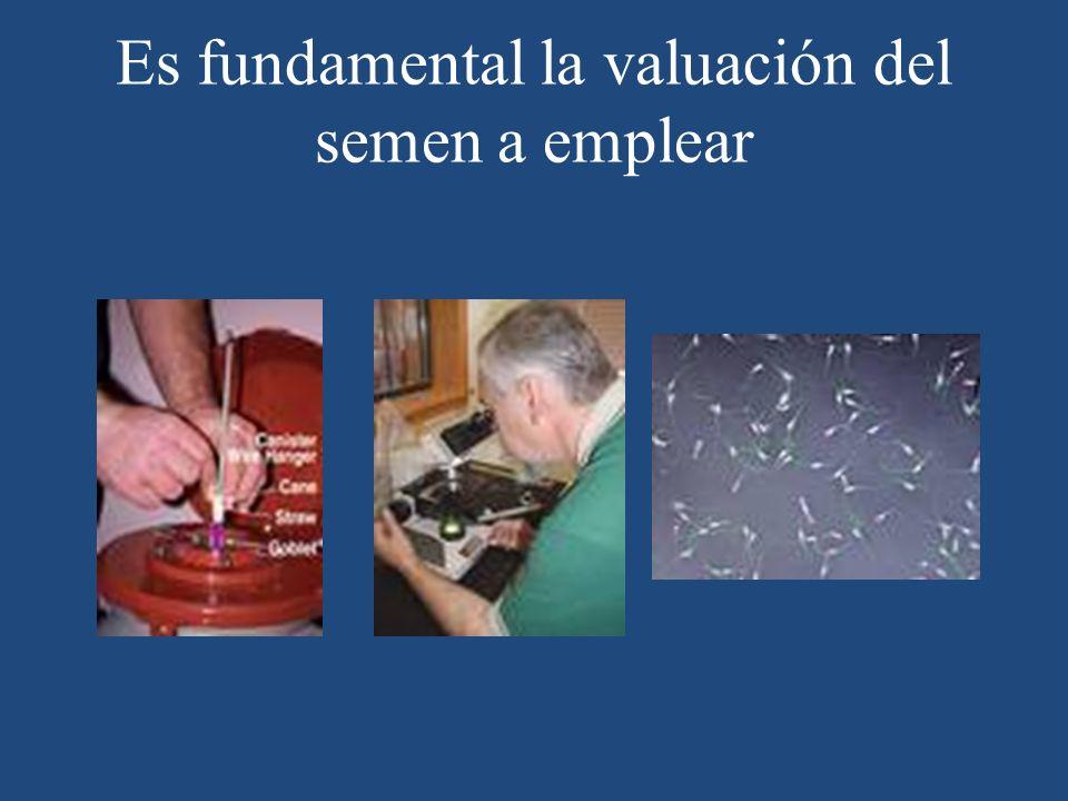 Es fundamental la valuación del semen a emplear