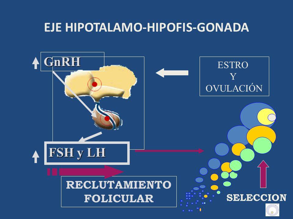 EJE HIPOTALAMO-HIPOFIS-GONADA