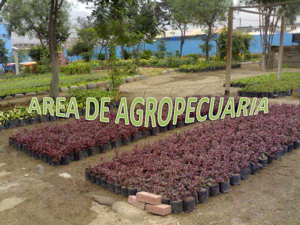 AREA DE AGROPECUARIA