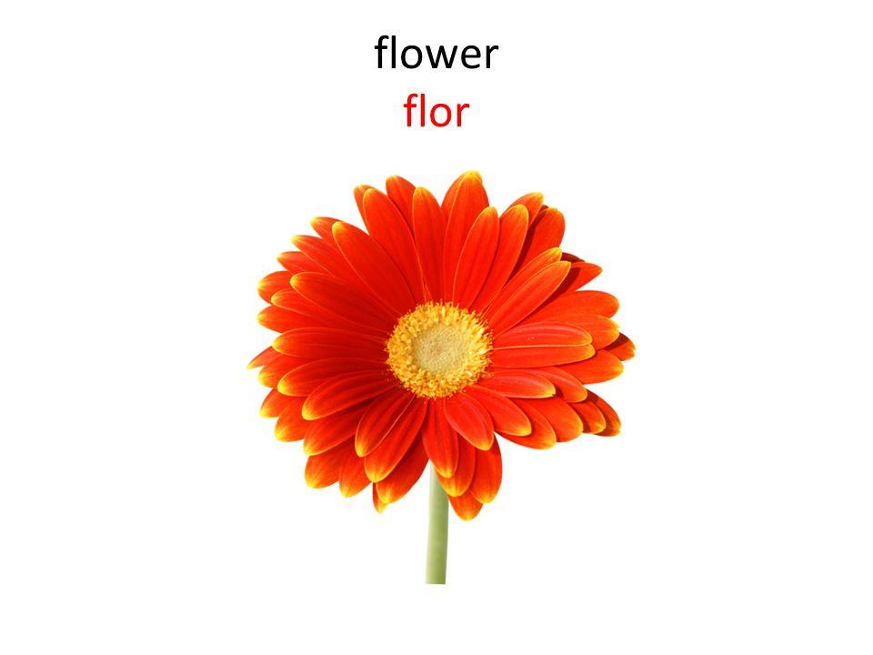 flower flor