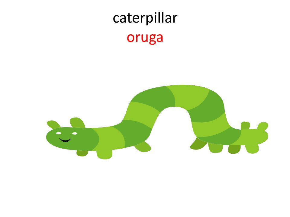 caterpillar oruga