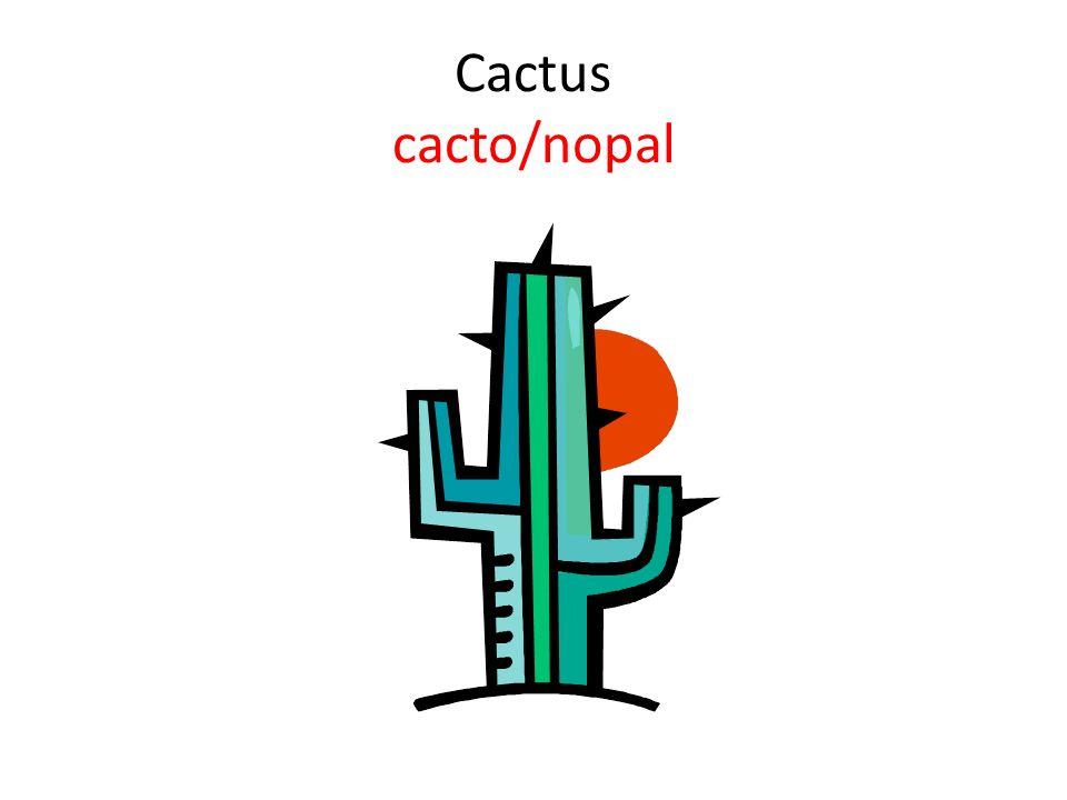 Cactus cacto/nopal