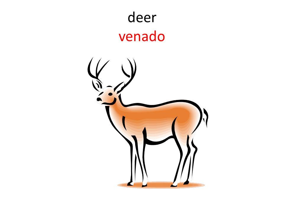 deer venado