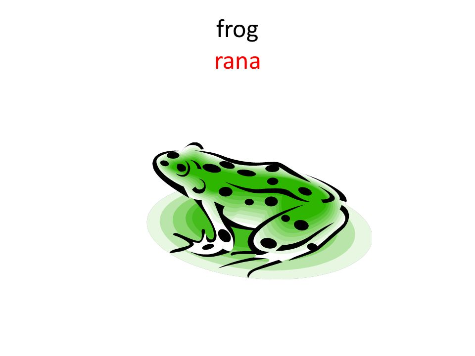 frog rana