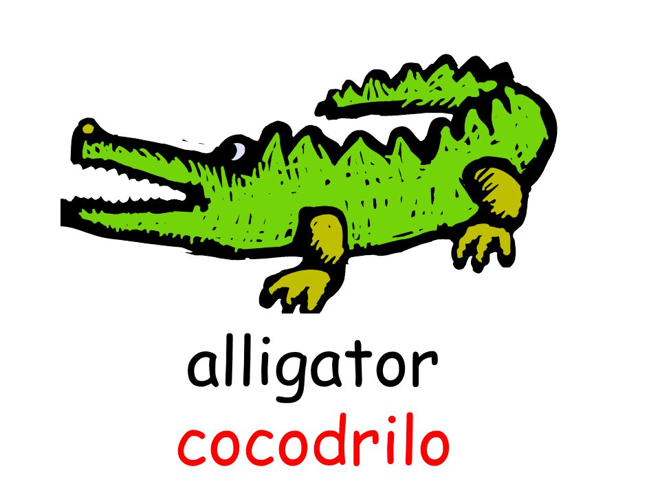 alligator cocodrilo