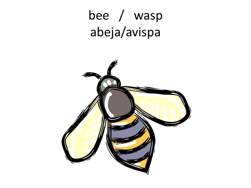 bee / wasp abeja/avispa