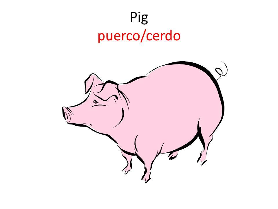 Pig puerco/cerdo