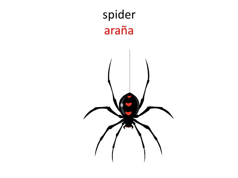 spider araña