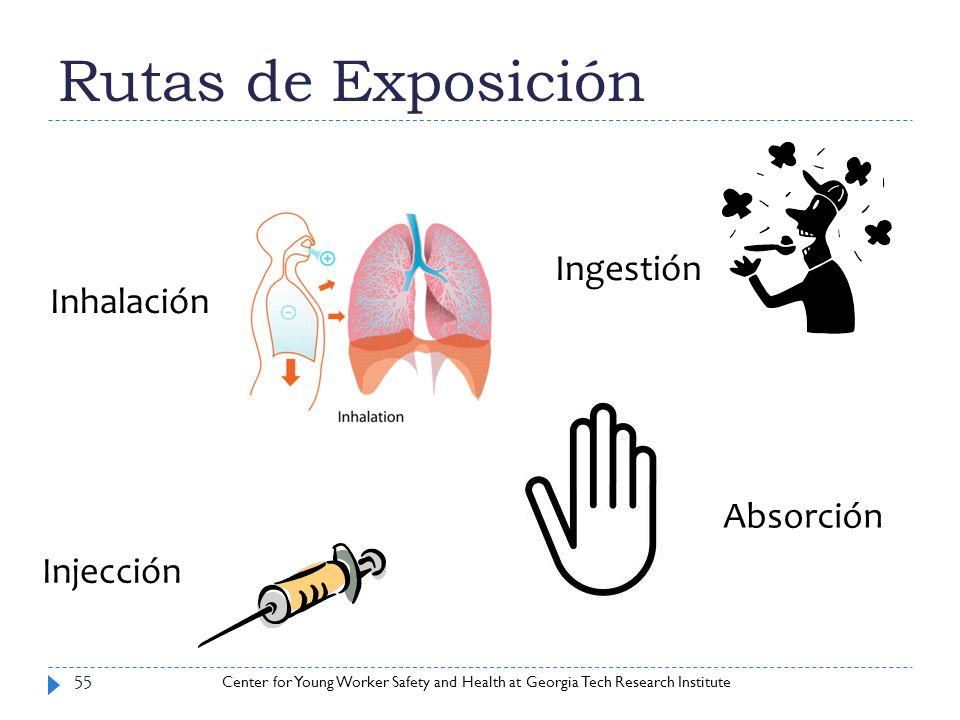 Rutas de Exposición Ingestión Inhalación Absorción Injección