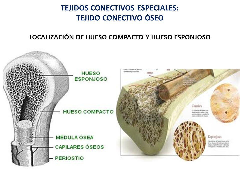 Atractivo Foto De Hueso Compacto Viñeta - Anatomía de Las ...