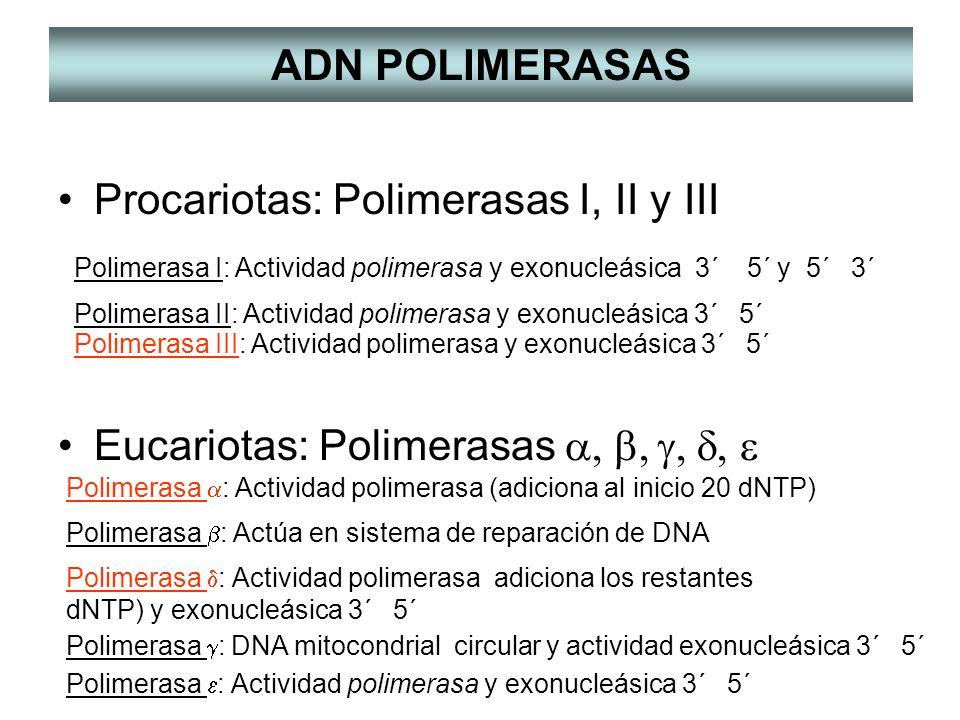 Rna polimerasas en procariotas