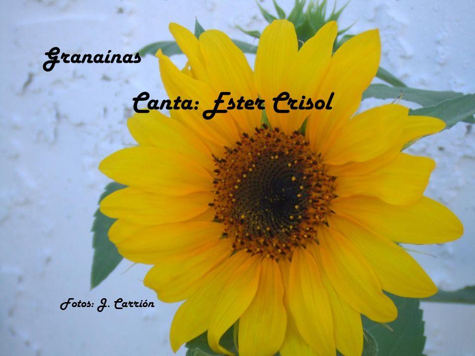 Granaínas Canta: Ester Crisol Fotos: J. Carrión