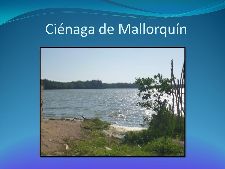 Ciénaga de Mallorquín