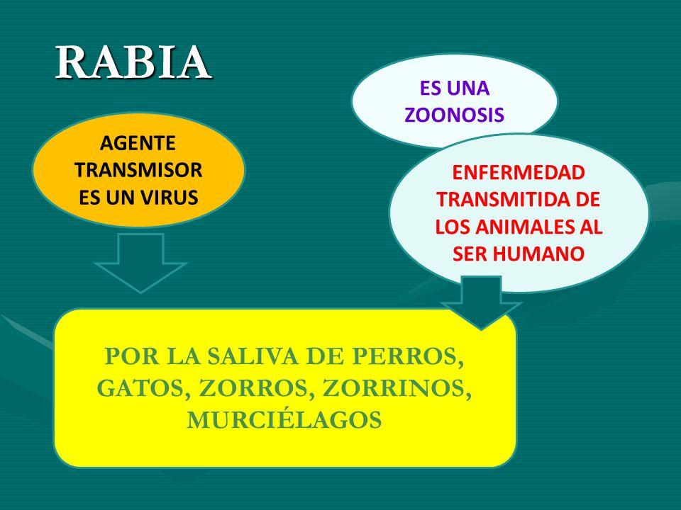 RABIA POR LA SALIVA DE PERROS, GATOS, ZORROS, ZORRINOS, MURCIÉLAGOS