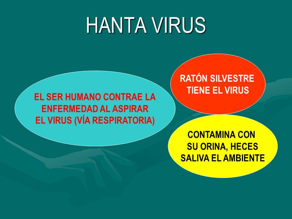 EL SER HUMANO CONTRAE LA EL VIRUS (VÍA RESPIRATORIA)