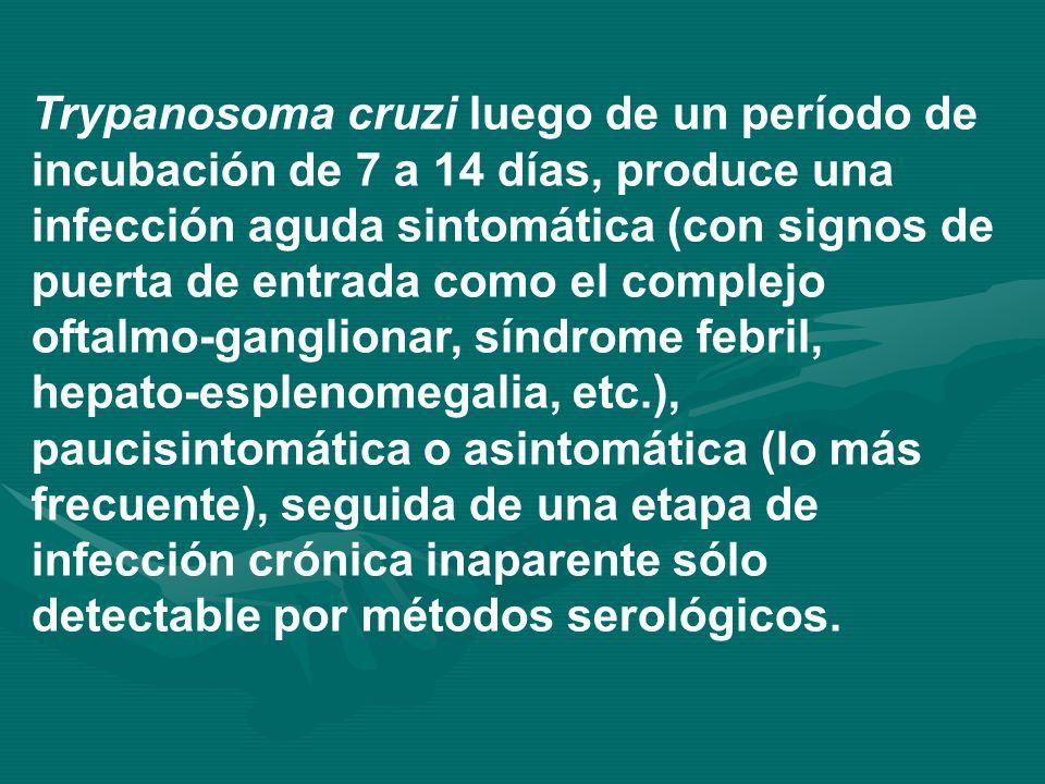 Trypanosoma cruzi luego de un período de incubación de 7 a 14 días, produce una infección aguda sintomática (con signos de puerta de entrada como el complejo oftalmo-ganglionar, síndrome febril, hepato-esplenomegalia, etc.), paucisintomática o asintomática (lo más frecuente), seguida de una etapa de infección crónica inaparente sólo detectable por métodos serológicos.
