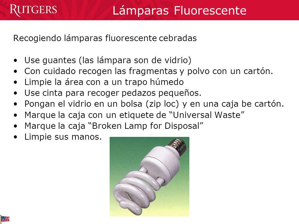 Lámparas Fluorescente
