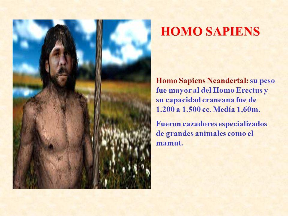 HOMO SAPIENS Homo Sapiens Neandertal: su peso fue mayor al del Homo Erectus y su capacidad craneana fue de 1.200 a 1.500 cc. Medía 1,60m.