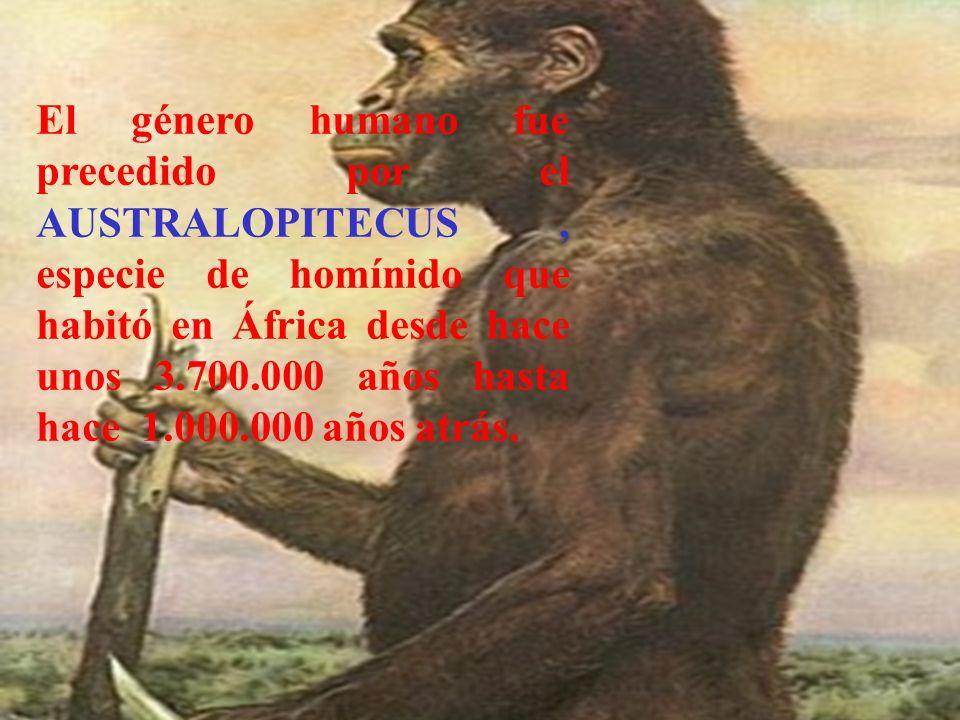 El género humano fue precedido por el AUSTRALOPITECUS , especie de homínido que habitó en África desde hace unos 3.700.000 años hasta hace 1.000.000 años atrás.
