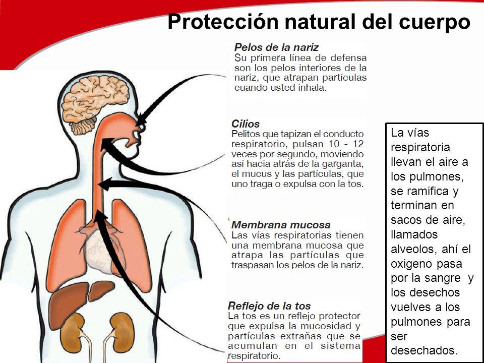 Protección natural del cuerpo